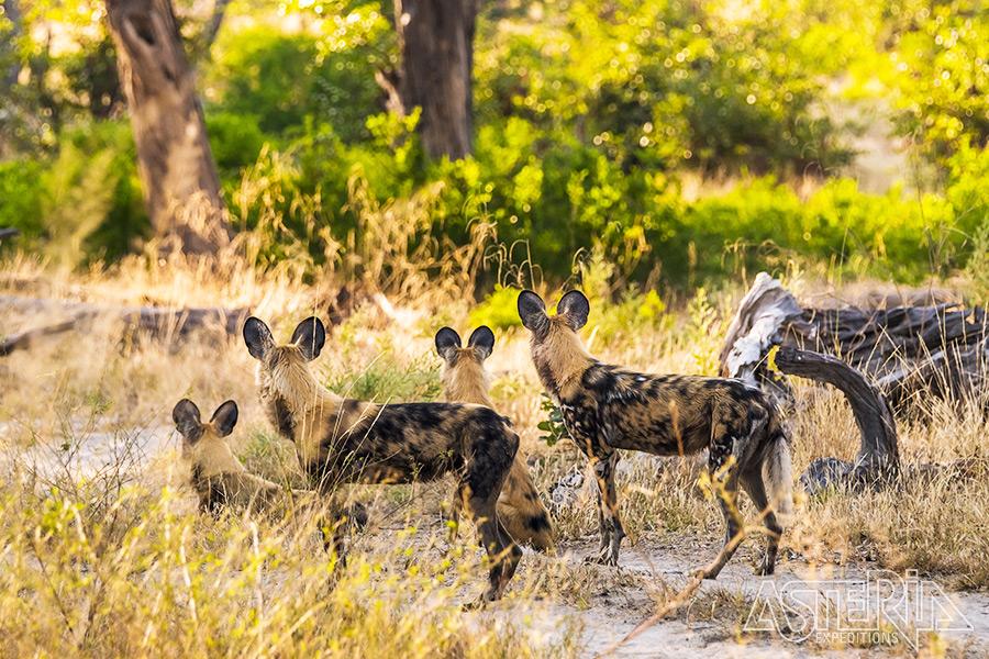 Begeleide reizen naar Botswana & Namibië - Foto 1