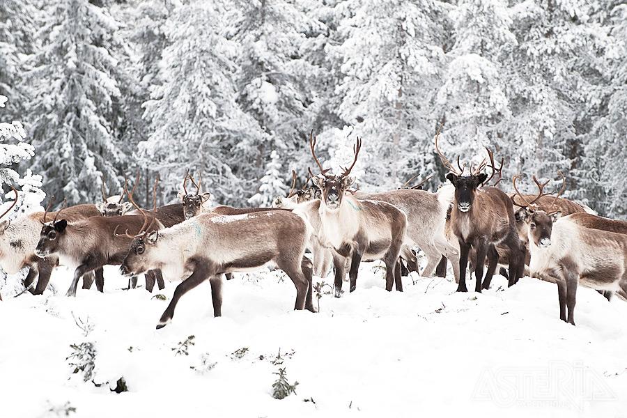 Winters Lapland 2021-2022 - Foto 2