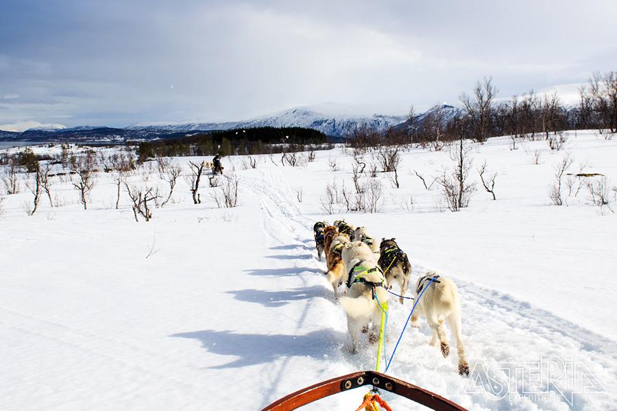 Winters Lapland 2020-21 - Foto 1