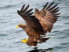 De kans reëel dat u zeearenden en andere vogelsoorten te zien krijgt
