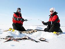 Bevroren berkenbos nabij het Torneträsk Meer