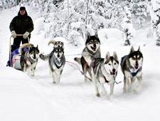 U maakt een mooie en lange tocht met de huskies van 20km