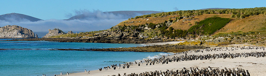 Falklands, South Georgia en Antarctica - MV Plancius | 19 dagen