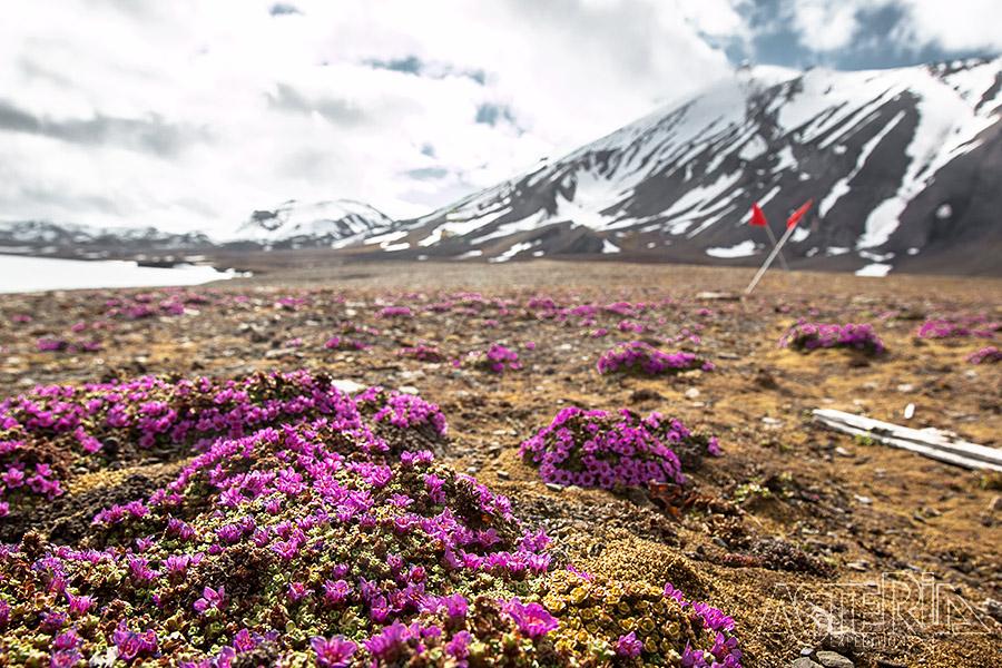 Expeditiecruise rond West-Spitsbergen - Foto 3